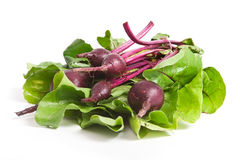 Fresh red beetroot Royalty Free Stock Photo