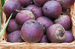 Fresh red beets Stock Photography