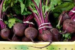 Fresh Red Beets Royalty Free Stock Photo