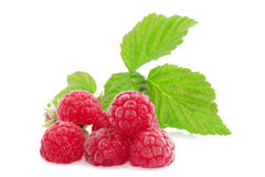 Fresh red berry with leaves on white background Royalty Free Stock Image