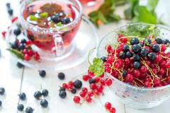 Fresh red and black currant in glass vase Royalty Free Stock Photo