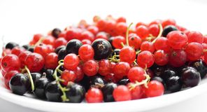 Fresh red and black currant on plate Royalty Free Stock Image