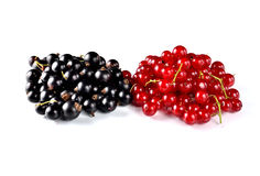 Fresh red and black currants isolated on white background. Stock Images