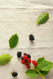 Fresh red and blue berries on vintage cloth Stock Image