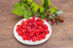 The fresh red bright raspberry berries on a white plate and raspberry branches on a brown wooden surface in the garden stock photos