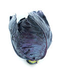 Fresh red cabbage Stock Image