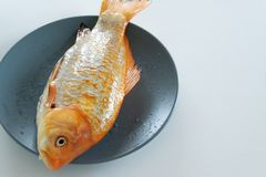 Fresh red  Carassius fish ready for cooking. Healthy eating concept, space for text. Or menu royalty free stock image