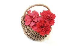 Fresh red carnations blossoms in a basket Royalty Free Stock Photography