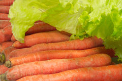 Fresh red carrots and green salad. Leaves Royalty Free Stock Photo