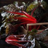 Fresh red chard. From a farmers market close up Stock Photography
