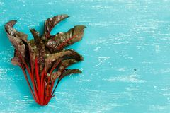 Fresh red chard. From a farmers market top view on a turquoise blue background Stock Image