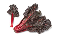 Fresh red chard Royalty Free Stock Photography