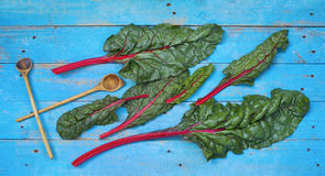 Fresh red chard and wooden spoons Royalty Free Stock Images