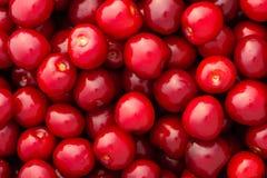 Fresh red cherries Stock Photos