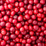 Fresh red cherries Royalty Free Stock Image