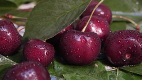 Fresh red cherries with water drops and green leaves. Sweet ripe fruit concept stock video footage