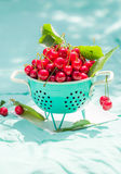 Fresh red cherry fruit green colander Stock Images