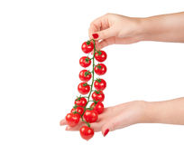 Fresh red cherry tomatoes Royalty Free Stock Photos