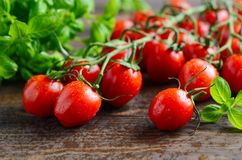 Fresh red cherry tomatoes with basil on a rustic wooden background. Fresh red cherry tomatoes with basil on a rustic wooden background, selective focus Royalty Free Stock Photo