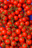 Fresh red cherry tomatoes royalty free stock photo