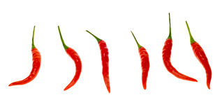 Fresh Red Chili Peppers Stock Photography