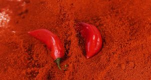 Fresh Red Chili Peppers, capsicum annuum falling on Powder of Red Chili Peppers, Slow Motion
