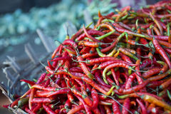 Fresh Red Chili Peppers on Display at Farmers Market Royalty Free Stock Photo