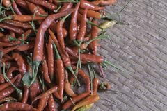 Fresh red chilli Stock Photos