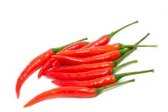 Fresh red chilli peppers. A bunch of fresh red hot chilli peppers isolated on white background Royalty Free Stock Images