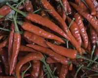 Fresh red chilli Stock Photography