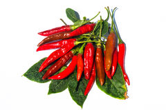 Fresh red chilli on white background. Isolated stock photography