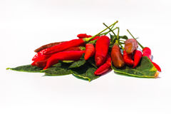 Fresh red chilli on white background. Isolated royalty free stock image