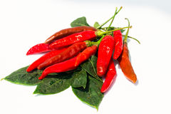 Fresh red chilli on white background. Isolated stock images