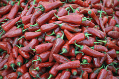 Fresh Red Chillies Stock Images
