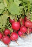 Fresh red colored radish from a organic garden Stock Photos