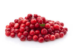 Fresh red cowberries. On a white background Stock Photos