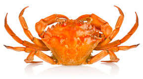 Fresh red crab Royalty Free Stock Images