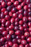 Fresh red Cranberries Royalty Free Stock Images