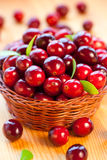 Fresh red cranberries. With leaves in basket Stock Images