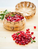 Fresh red cranberries. With leaves in basket. Vertical view Royalty Free Stock Photos