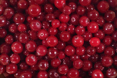 Fresh red cranberries background. Fresh red cranberries as background texture Stock Photos