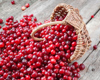 Fresh red cranberries and berries  in basket on old table. Fresh red cranberries and berries  in basket on old rustic table Stock Photos