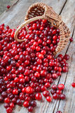 Fresh red cranberries, berries and  basket on old table Royalty Free Stock Photo