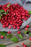 Fresh red cranberries with leaves on the table. View stock images