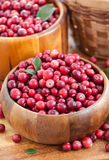 Fresh red cranberry Stock Images
