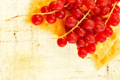 Fresh red currant Stock Photo