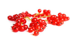 Fresh red currant. On white background Stock Image
