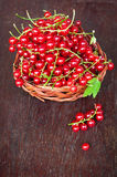 Fresh red currant berries Stock Photo