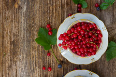 Fresh red currant berries Stock Image
