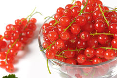 Fresh red currant berries Royalty Free Stock Photography